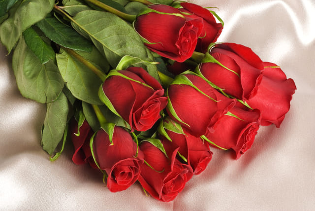 hoa hồng cho ngày Valentine